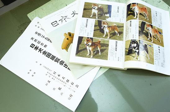 展覧会出場の始まりは、番犬として飼った柴犬